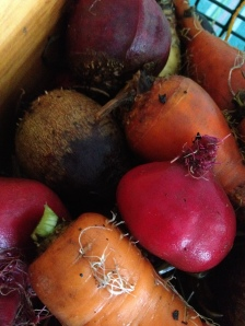 Six kinds of beets, three kinds of carrots...I feel rich.